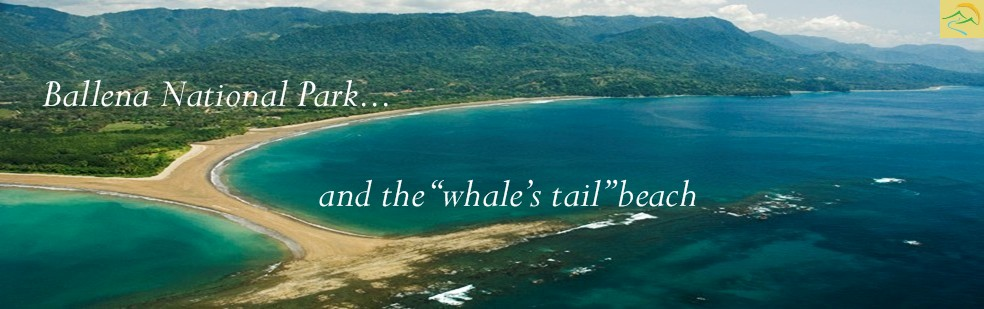 Ballena National Park Header Whales Tail Uvita