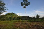 Costa Rica Lot Mountain View Trees San Buenas House background